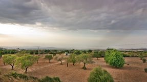 Landscape with almond trees Royalty Free Stock Image