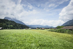 Landscape in the Alps with fresh green meadows and blooming flowers and snowcapped mountain tops in the background Royalty Free Stock Image