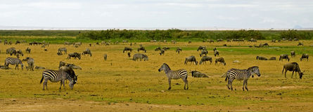 Landscape of the Amboseli National Park Stock Images