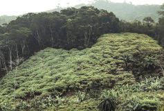 Landscape in Amedzofe, Volta Region, Ghana Stock Photo