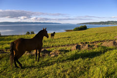 Landscape And Horses Royalty Free Stock Image