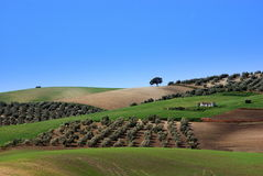 Landscape in andalusia Stock Images