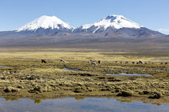 Landscape of the Andes Mountains, with llamas grazing. Stock Photo