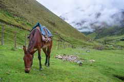 Landscape in Andes.   Peru. Stock Images