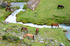 Landscape in Andes.   Peru. Royalty Free Stock Photos