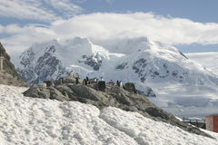 Landscape in Antarctica Royalty Free Stock Image