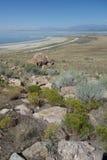 Landscape Antelope Island. Lanscape on Antelope Island, Salt Lake City, Utah Stock Image