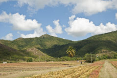 Landscape, Antigua Royalty Free Stock Image