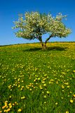 Landscape with apple tree Stock Photos