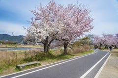 Landscape of Arashiyama, Kyoto, Japan. Cherry Blossom Road in Arashiyama, Kyoto, Japan Stock Photography