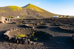 Landscape area of the famouse Vineyards in La Geria, Lanzarote, Canary islands, Spain royalty free stock photography