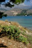 Landscape of Argostoli with blue sea and a fig plant royalty free stock photos