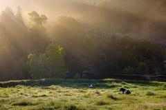 Landscape around Furnas, Sao Miguel Island, Azores archipelago. Portugal stock images