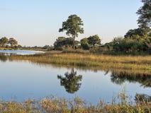 Landscape around the lake, reservation Bwabwata, Namibia Royalty Free Stock Images