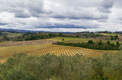 Landscape around Monteriggioni, Italy Stock Photo