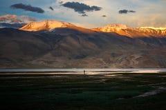 Landscape Around Tso Moriri Lake In Ladakh, India Royalty Free Stock Photography
