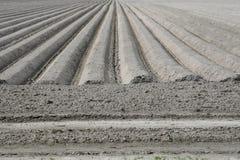 Landscape art in the fields of the polder, Flevoland, Netherlands Stock Photos
