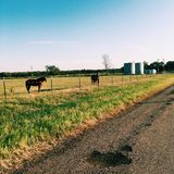 Landscape. Artsy country road with horses royalty free stock images