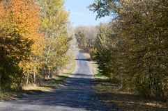 Landscape - asphalt road in the autumn forest with trees. With yellow leaves Stock Images