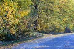 Landscape- asphalt road covered with yellow leaves Royalty Free Stock Image