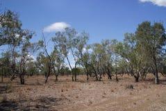 Landscape in Australia Stock Photos