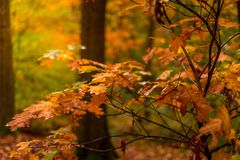Landscape in autumn with big trees Royalty Free Stock Image