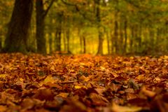 Landscape in autumn with big trees Stock Photos