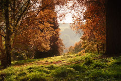 Landscape Autumn Fall forest into bright morning Royalty Free Stock Photo
