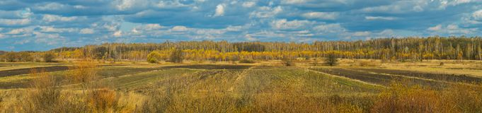 Landscape autumn field surrounded by yellow trees under a blue cloudy sky. For your design Stock Photos