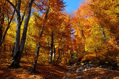 Landscape autumn in the forest Stock Photography