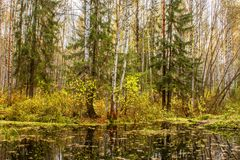 Landscape of autumn forest in front of the water of a forest lake Royalty Free Stock Photo