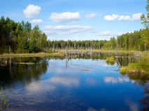 Landscape of autumn forest by the lake royalty free stock photo