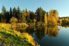 Autumn forest and lake in the fall season Stock Photos