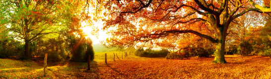 Landscape in autumn royalty free stock image