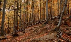 Landscape. Autumn Forest near HERCULANE (Romania Stock Photo
