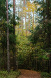 A landscape with an autumn forest pine birch fir-tree Stock Photos