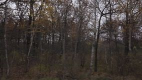 Landscape of autumn forest shot from the window of a moving car shot on an overcast day. stock footage