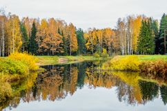 Landscape autumn landscape reflection of the forest in the lake. Royalty Free Stock Image