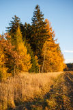 Landscape with autumn leaves in forest. Royalty Free Stock Photography