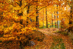 Landscape with autumn leaves in forest. Royalty Free Stock Image