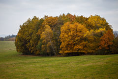 Landscape with autumn leaves in forest. Stock Photography