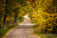 Landscape with autumn leaves in forest. Royalty Free Stock Photos