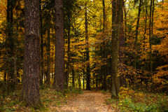 Landscape with autumn leaves in forest. Royalty Free Stock Images
