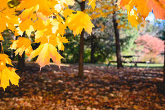 Landscape with autumn leaves . Retro style filter, maple leaves royalty free stock image