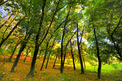 Landscape with autumn in the park Stock Image