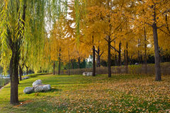 Landscape of autumn Royalty Free Stock Images