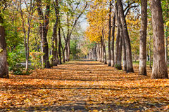 Landscape in autumn park Royalty Free Stock Images