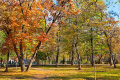 Landscape in autumn park Stock Photos