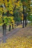 Landscape Autumn Park Royalty Free Stock Photography