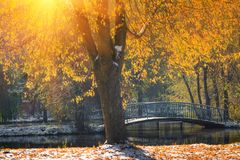 Landscape of autumn park. View of fallen yellow leaves and first snow in sunshine. royalty free stock photo